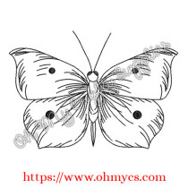 Sketch Drawing Butterfly Embroidery Design